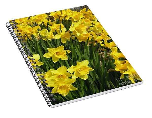 Golden Daffodils Spiral Notebook