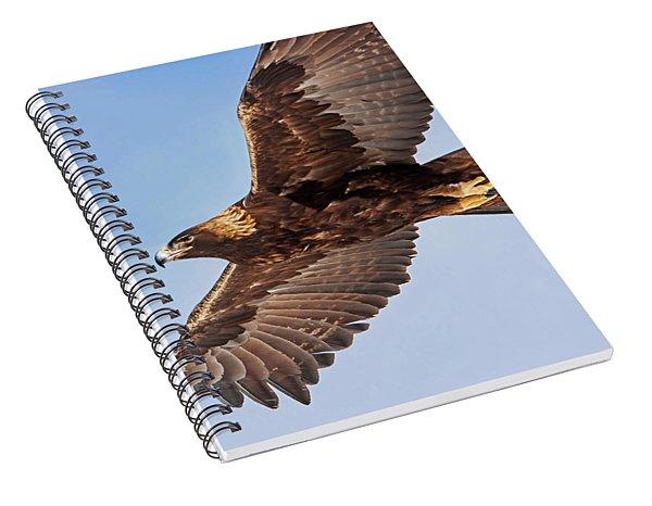 Golden Eagle Flight Spiral Notebook