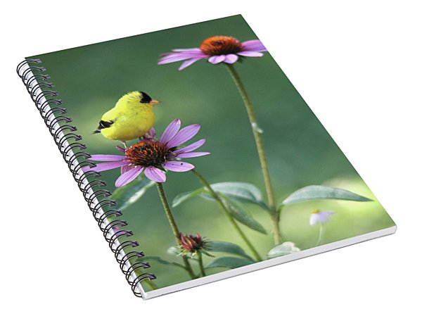 Goldfinch On A Coneflower Spiral Notebook