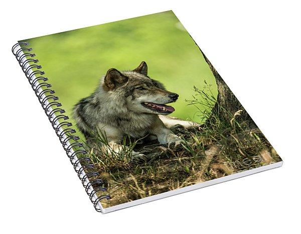 Gray Wolf In Shade Spiral Notebook