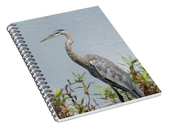 Great Blue Heron #2 Spiral Notebook