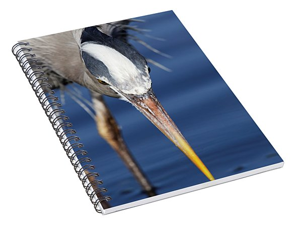 Great Blue Heron - Pin Point Spiral Notebook