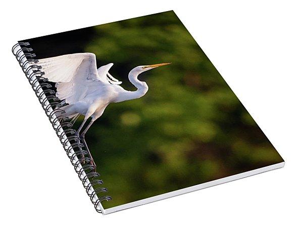 Great Egret 3174 Spiral Notebook