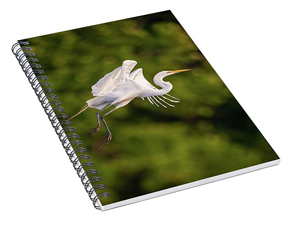 Great Egret 3176 Spiral Notebook