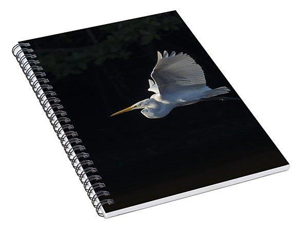 Great Egret In Morning Flight Spiral Notebook