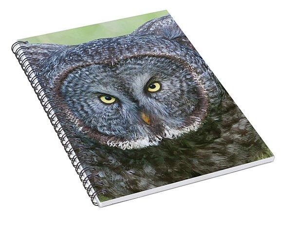 Great Gray Owl Flight Portrait Spiral Notebook
