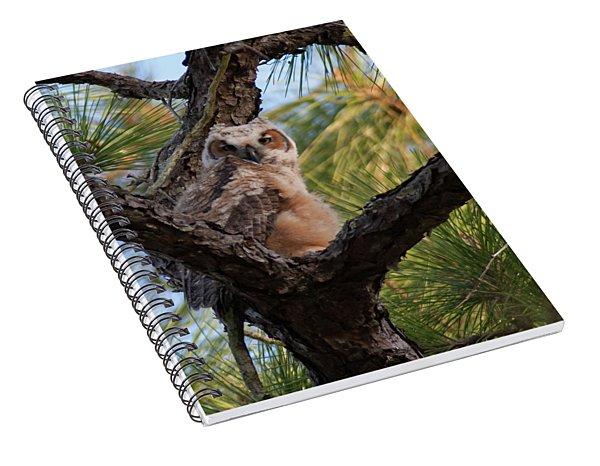 Great Horned Owlet Spiral Notebook