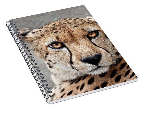 Harbin Leopard Spiral Notebook