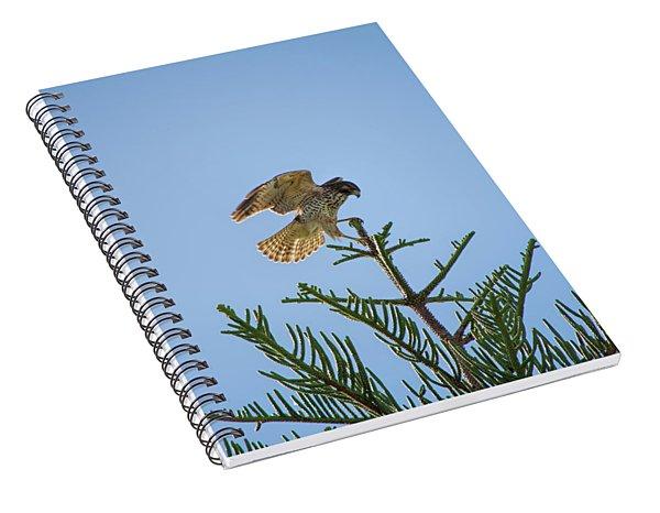 Hawk With Regal Landing Spiral Notebook