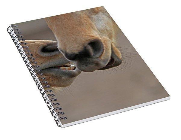 Horse Whisperer  Spiral Notebook