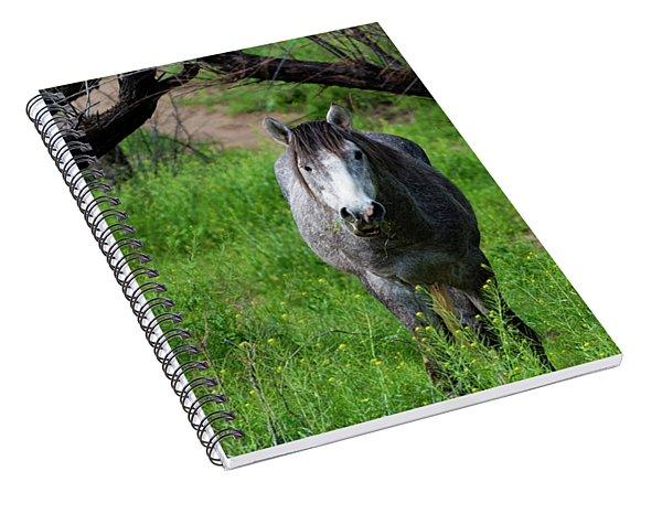 Horse's Arch Spiral Notebook