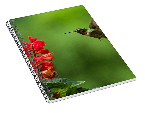 Hummingbird And Scarlet Sage Spiral Notebook