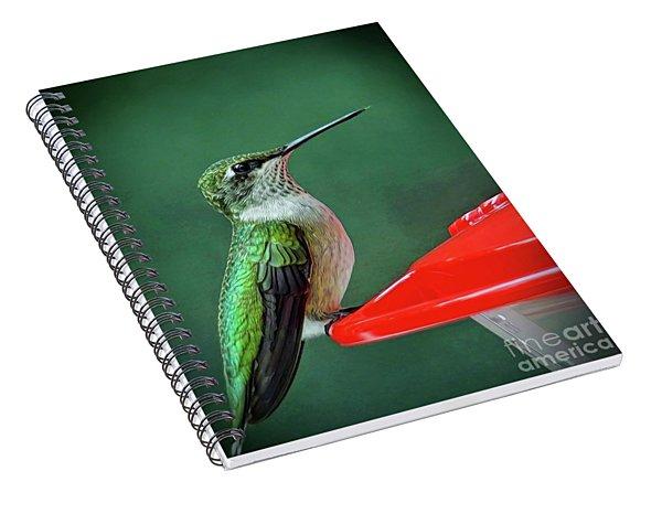 Hummingbird Portrait Spiral Notebook