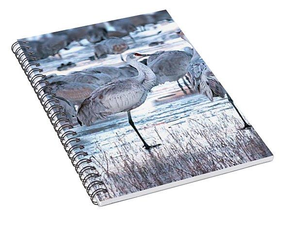 Icy Stroll Spiral Notebook
