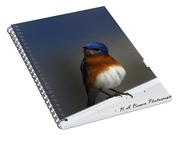 Inquisitive Bluebird Spiral Notebook