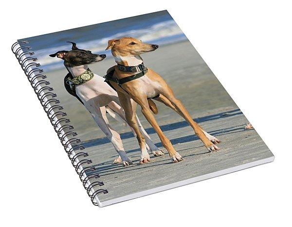 Italian Greyhounds On The Beach Spiral Notebook