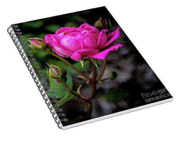 Knockout Rose Spiral Notebook