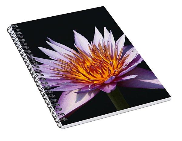Lavender Fire 1 Spiral Notebook
