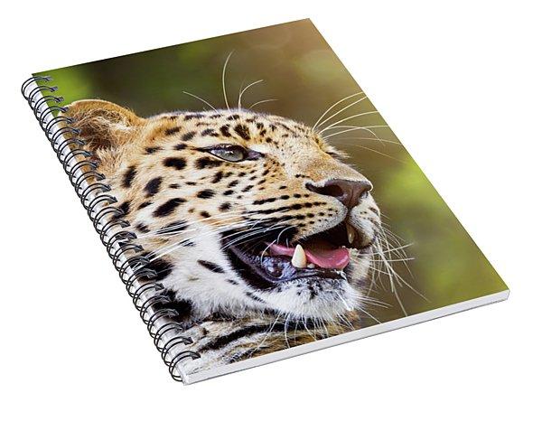 Leopard In Sunlight Spiral Notebook