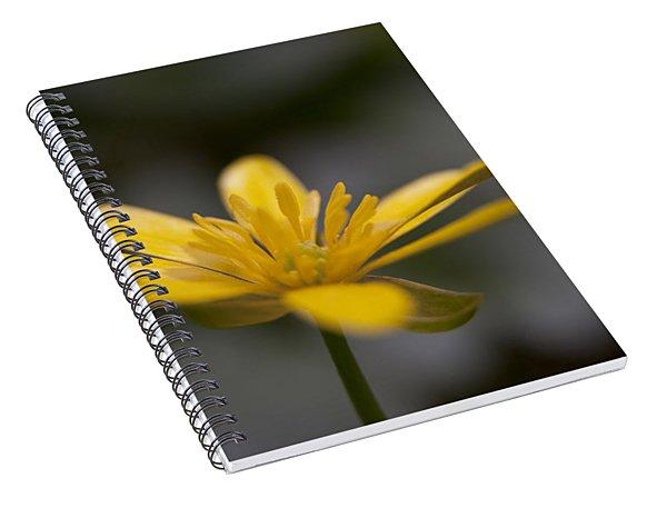 Lesser Celandine Spiral Notebook