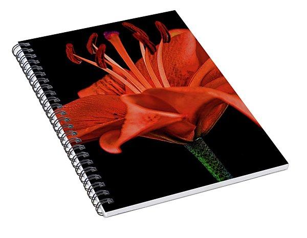 Lily 11018-1 Spiral Notebook