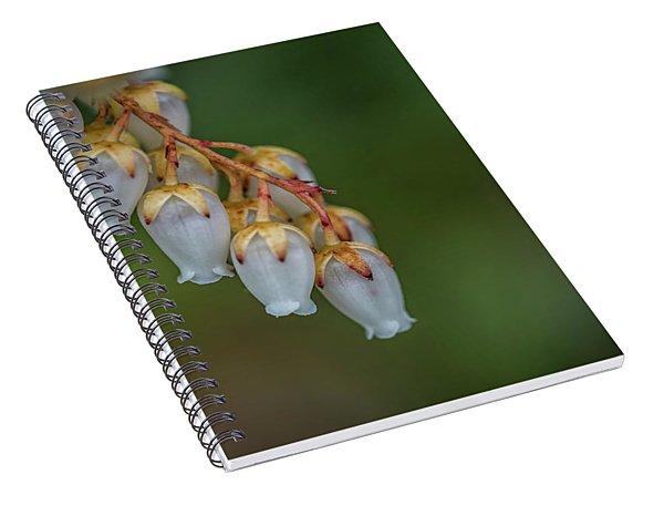 Little Crowns Spiral Notebook