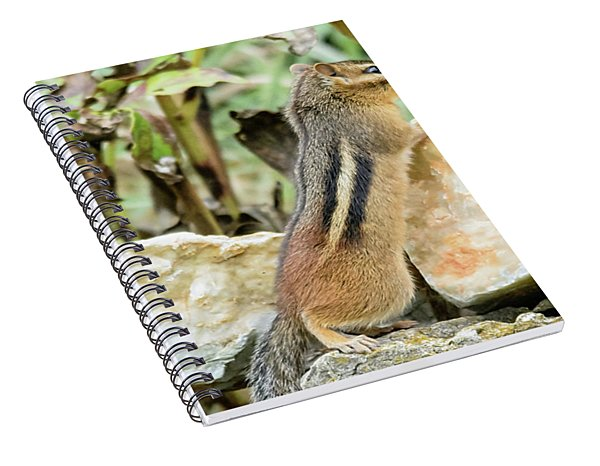Lookout Spiral Notebook