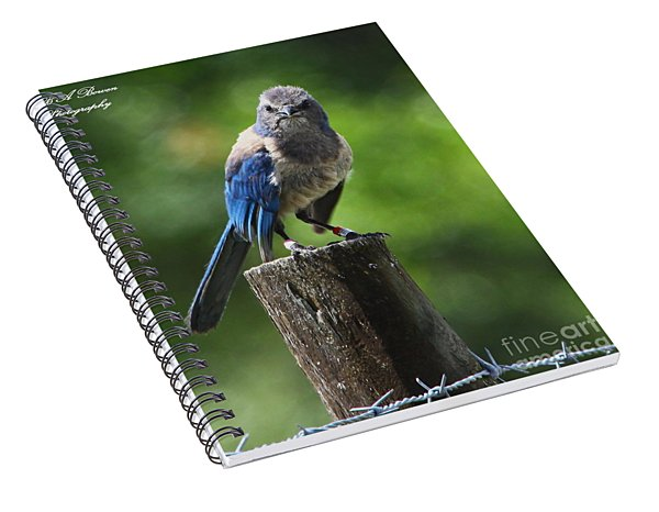 Mad Bird Spiral Notebook