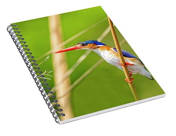 Malalchite Kingfisher Spiral Notebook
