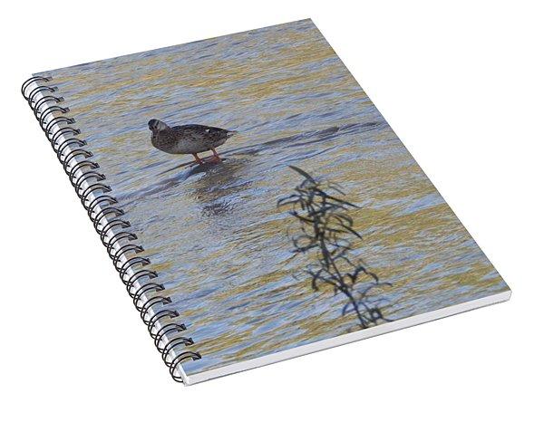 Mallard And The Branch Spiral Notebook