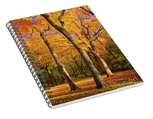 Spiral Notebook featuring the photograph Maple Treo by Scott Kemper
