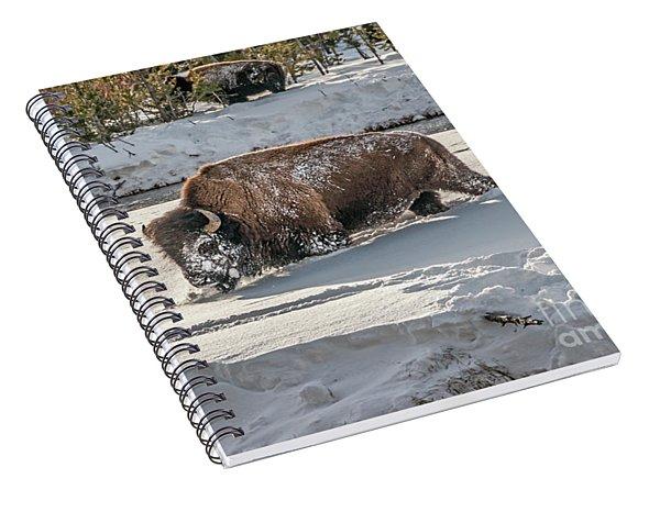 Masked Bison Spiral Notebook