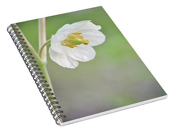 Mayapple Flower Spiral Notebook