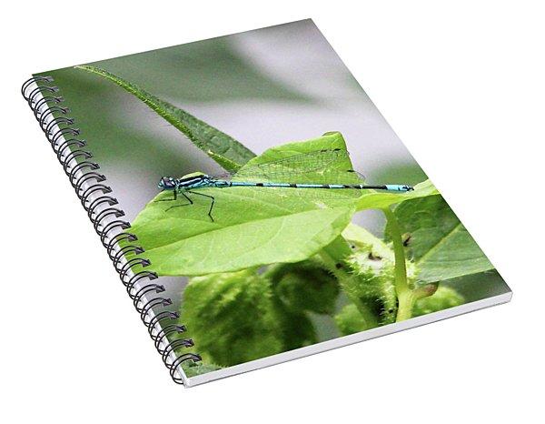 Mayfly Spiral Notebook