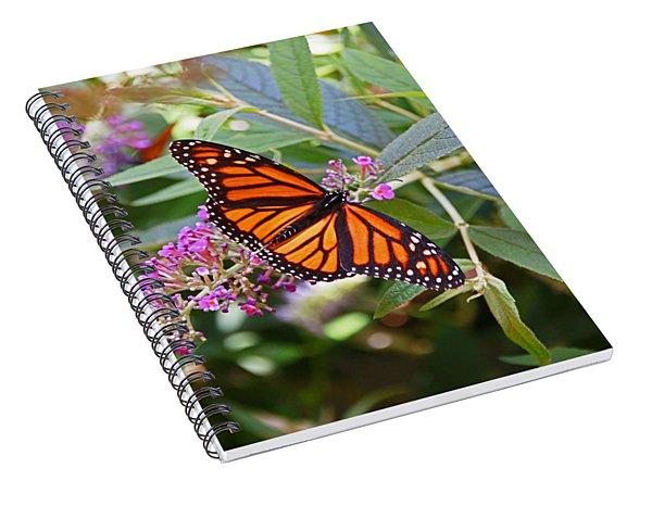 Monarch Butterfly 2 Spiral Notebook