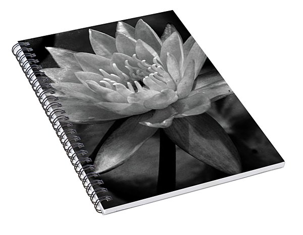 Moonlit Water Lily Bw Spiral Notebook