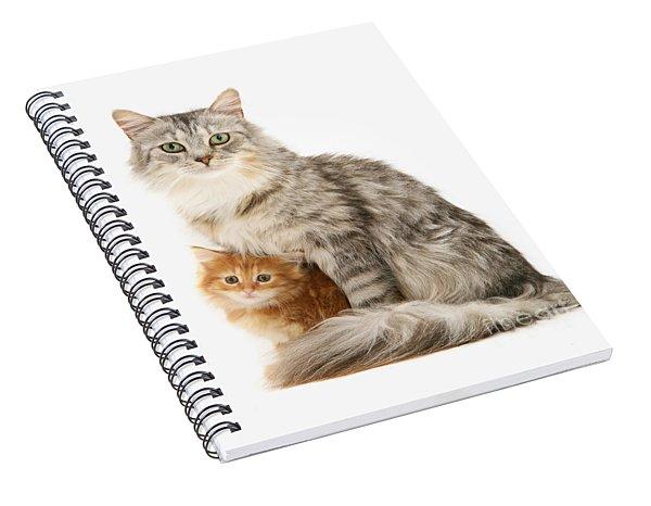 Mother Cat And Ginger Kitten Spiral Notebook