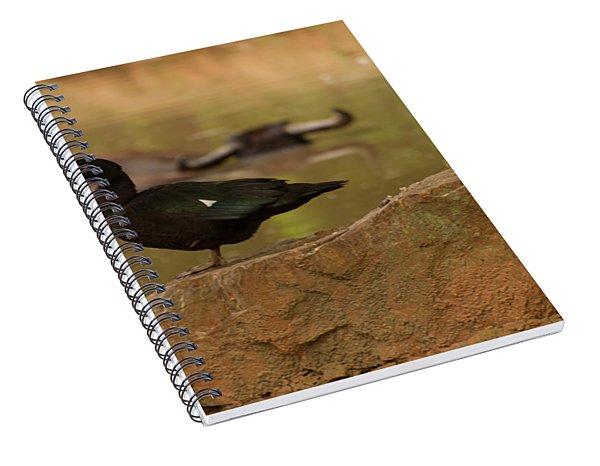Muscovy Duck Spiral Notebook