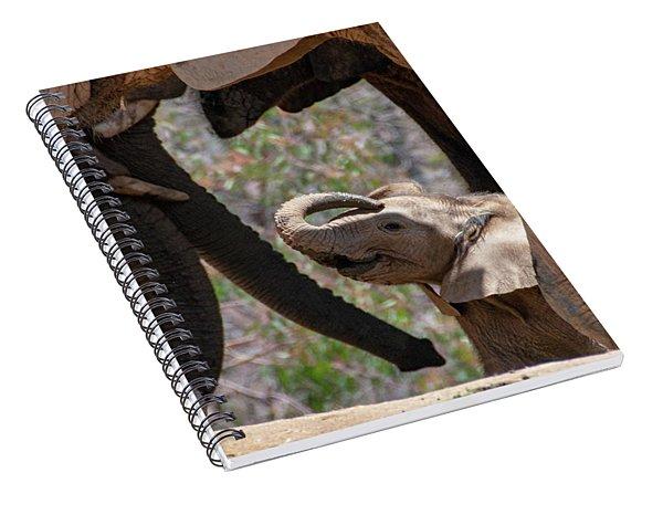 New Addition Spiral Notebook