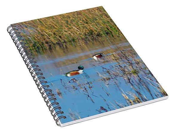 Northern Shovelers Spiral Notebook