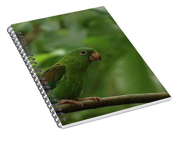 Orange-chinned Parakeet  Spiral Notebook