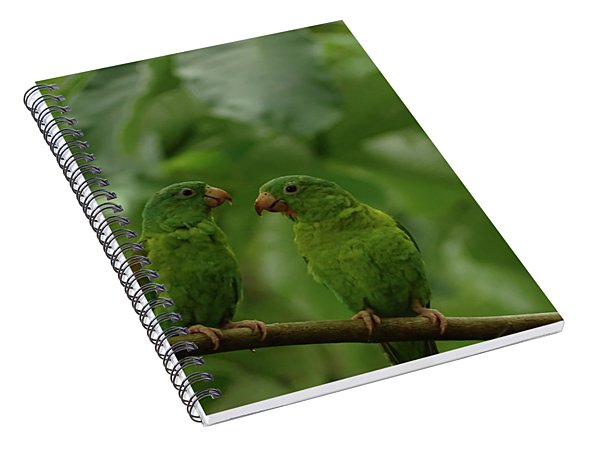 Orange-chinned Parakeets-  Spiral Notebook