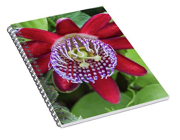 Passiflora Ruby Glow. Passion Flower Spiral Notebook