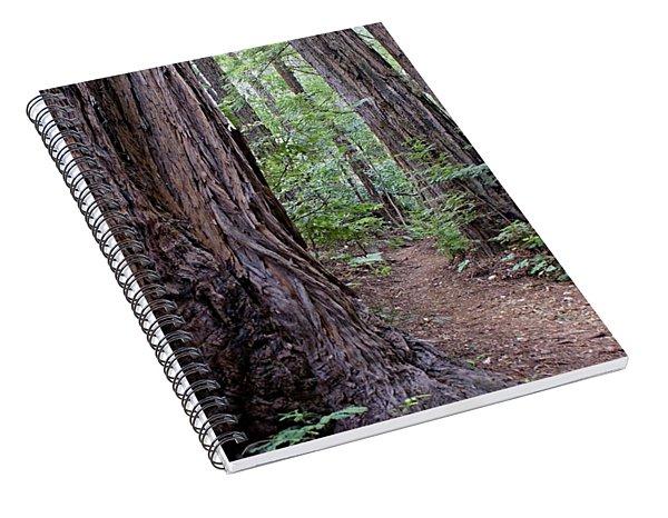 Pathway Through A Redwood Forest On Mt Tamalpais Spiral Notebook