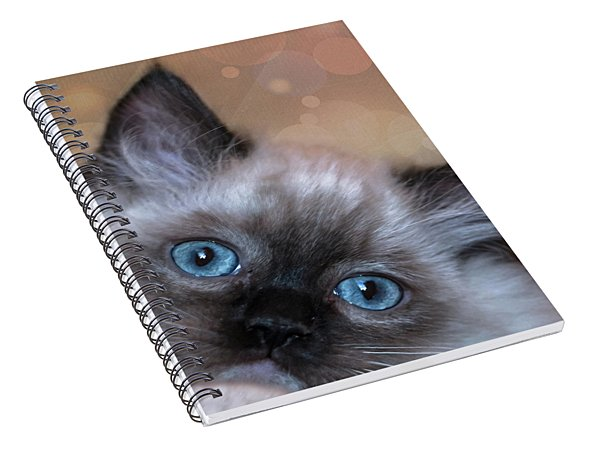 Peek-a-boo 2 Spiral Notebook