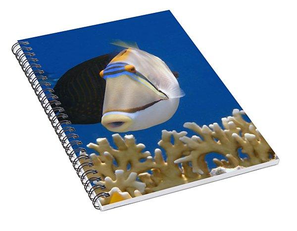 Picasso Fish And Klunzingerwrasse Spiral Notebook