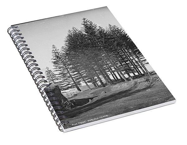 Pine Trees, Norfolk Island, Kerry And Co, Sydney, Australia, C. 1884-1917 Spiral Notebook