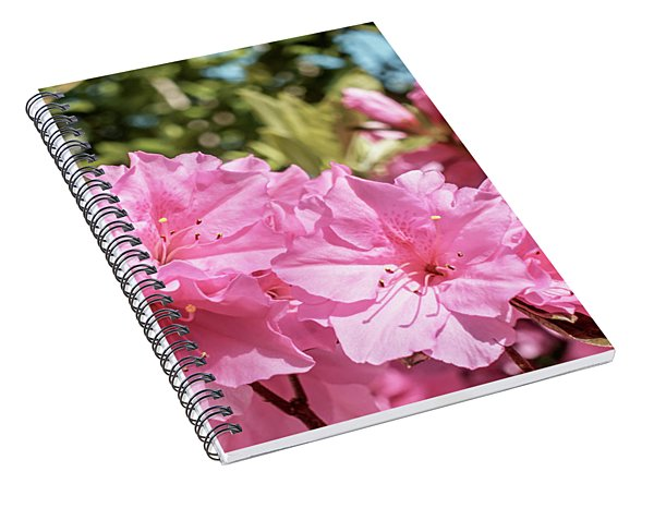 Pink Azalea Bush Blooming In North Georgia 048a Spiral Notebook