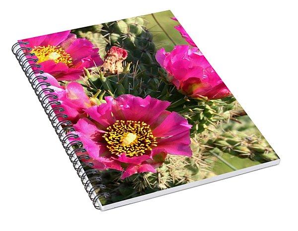 Pink Cactus Blooms Close-up Spiral Notebook