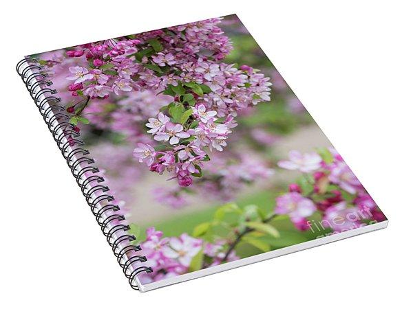 Pink Apple Blossom Spiral Notebook